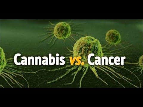 Cannabis vs. Cancer