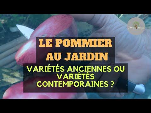 #113 LE POMMIER : variétés anciennes ou contemporaines au jardin ?