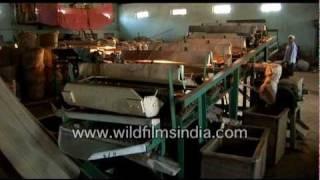 Tea being processed in a garden factory in India