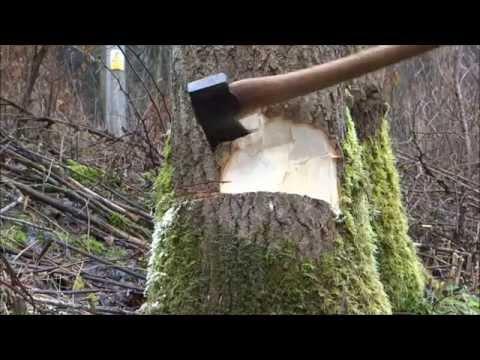 Kácení stromu ruční pilou a sekerou