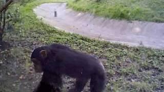 くん チンパンジー 殺 処分 パン