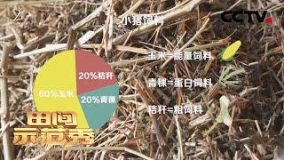 《田间示范秀》 20210112 奔跑吧 藏香猪|CCTV农业 - YouTube
