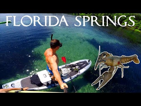 Catch And Cook - CRAWFISH - In Florida Springs/Caves