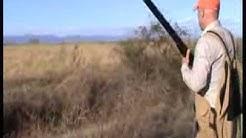 Pheasant Hunting in BULGARIA