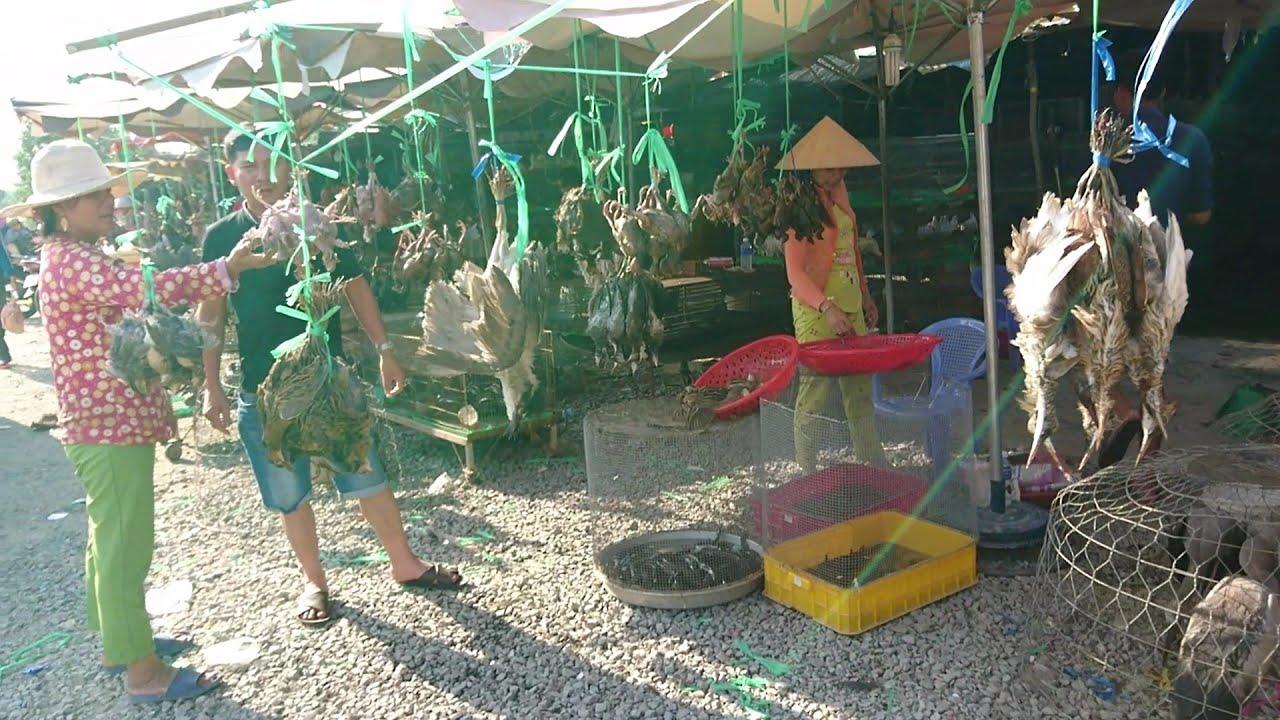 Chợ chim hoang dã thạnh hóa lớn nhất miền tây | mua gì cũng có |wild animals NKMT