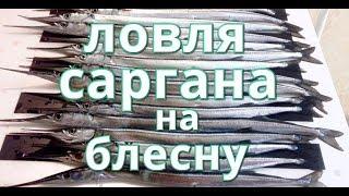 Ловля саргана на блесну (garfish metaljig)