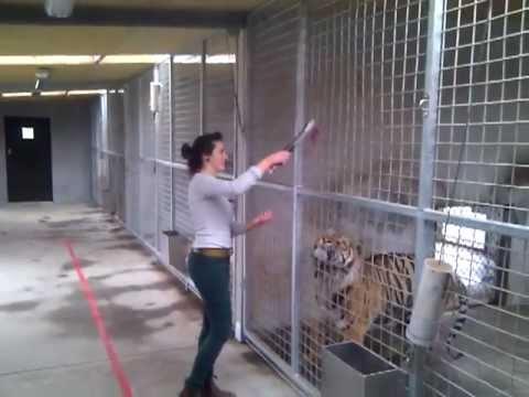 Orana Wildlife Park - Feed a Tiger!