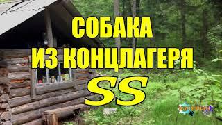 ВЕРНАЯ СОБАКА ИЗ КОНЦЛАГЕРЯ СС БОНЗО №349