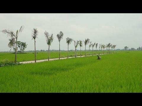 Đại Lai Quê Hương Tôi - Đại Lai Gia Bình Bắc Ninh