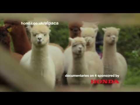 Honda   24 Hours In A & E Sponsorship