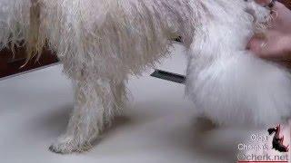 Как отфенивать шерсть пуделю