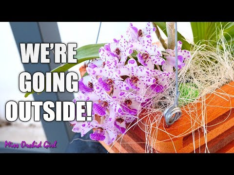 Spring plans for my Orchids - Outside & inside growspace, who goes, who stays?