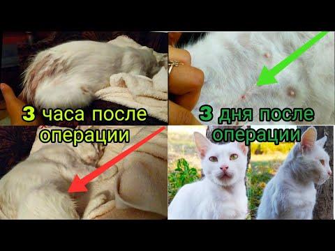 Стерилизация кошки, восстановление после операции. СМОТРЕТЬ ДО КОНЦА!☝