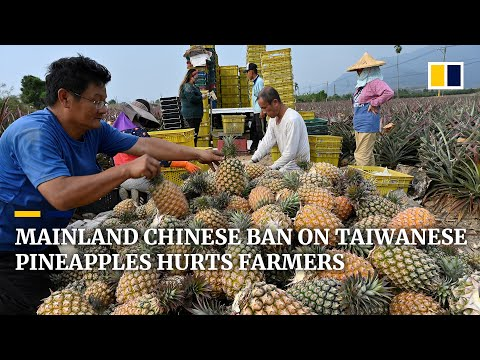 Mainland China's ban on Taiwan's pineapple exports hurts farmers despite surge in local consumption