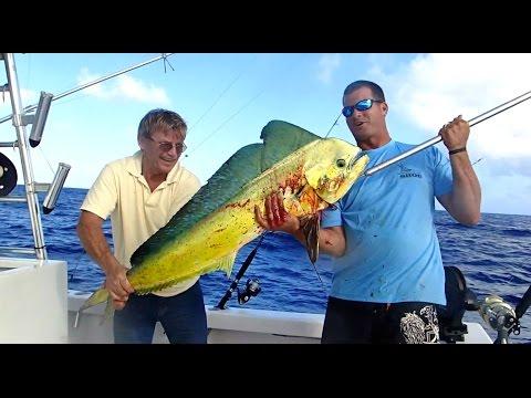 SHARK ATTACK! - St. Thomas , Virgin Islands Travel Vlog