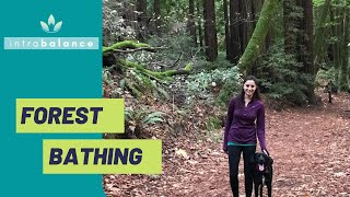 How and Why to Try Forest Bathing