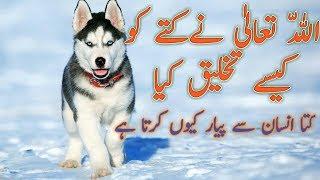 Islamic information ||History of Dog Creation|| Kutte ko kaise paida kiya gaya.Urdu/Hindi