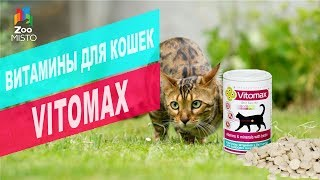 Витамины для кошек Vitomax | Обзор витамин для кошек Vitomax