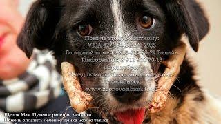 Пулевое ранение собаки сегодня водные процедуры после клиники Приют Дари добро Новосибирск