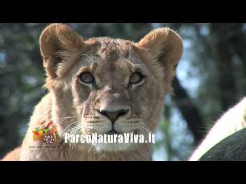 Parco Natura Viva: il video ufficiale