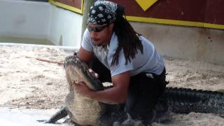 Alligator show on Miccosukee Tribe