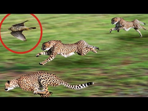 Fastest Animals In The World