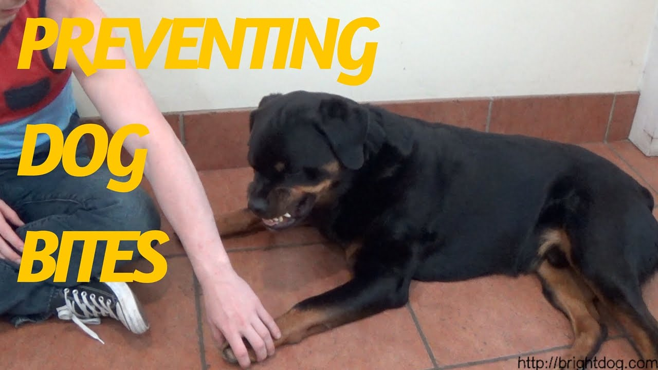 Watch Dog Training Videos