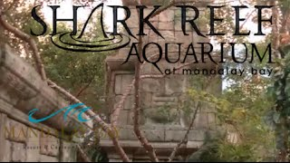 Shark Reef Aquarium at Mandalay Bay Las Vegas Tour & Review