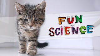 What Makes Something Cute? | Fun Science