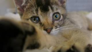One minute in Kitten Lady's house! thumbnail