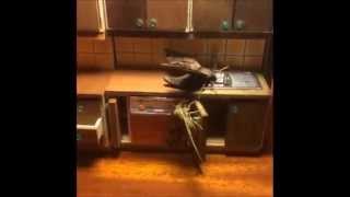 Merganser - Hawkmoth Kitchen