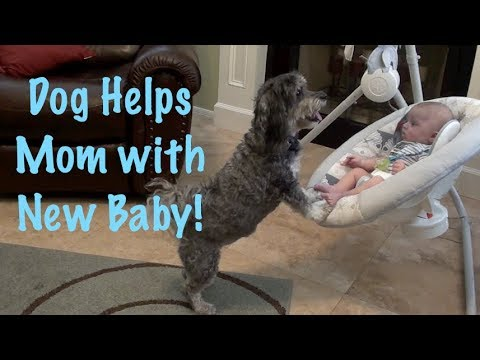 Dog Helps Mom with Baby!!  Happy Mother's Day from the Dog!