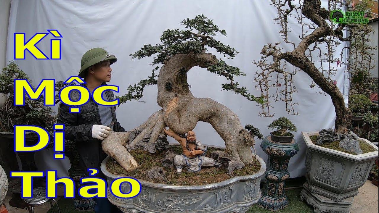 Giới thiệu kì mộc dị thảo đến ae chơi cây cảnh bonsai-BShp(A Đại 0967828345)