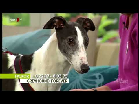 WDR Tiere suchen ein Zuhause