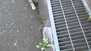 のらねこ☆にっき http://blog.livedoor.jp/straycats_dialy/ 旧ブログ http://mblg.tv/wildcatseye/ くろちゃんとカモカモが朝ごはんにいなかったのでいつもの場...