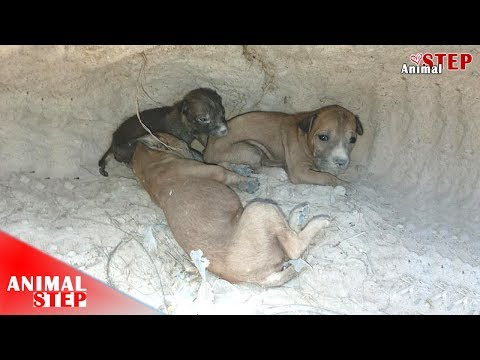 Rescued Puppies from the Woods that in Starvation Condition after Their Mother Died