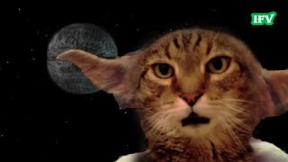 Funny video (Коты звездные войны) выпуск №11