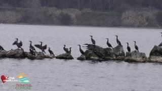 Lago di Bracciano, Marzo 2017