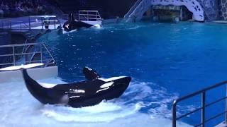 Москвариум. Шоу Тайна четырёх океанов.Косатки. Дельфины. Морж.