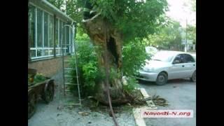 Видео Новости-N: Возле ресторана горело дерево(, 2016-07-23T15:21:12.000Z)