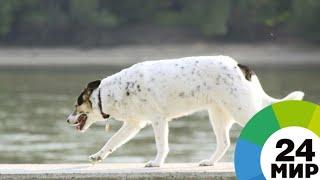 Слепая собака вернулась к хозяйке через три месяца скитаний - МИР 24