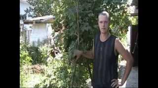 видео Тля на яблоне: как с ней бороться, профилактика