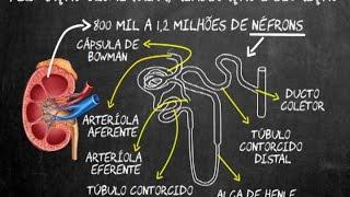 Capilares nível uma de estrutura dos biologia