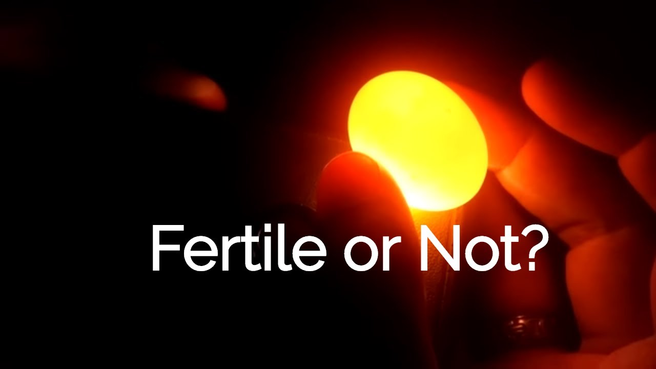 how to tell when your fertile