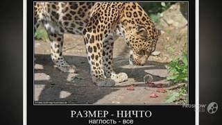 Угарные Демотиваторы по Русски № 13