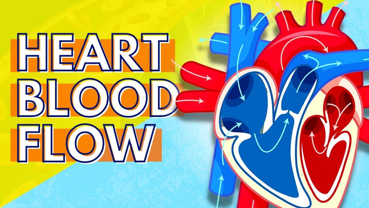 heart diagram with blood flow [ 1280 x 720 Pixel ]