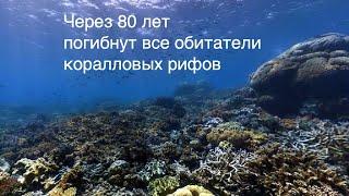 Видео новости науки SCDAILY. 01.03.2020. В 2100 году погибнут все обитатели коралловых рифов.