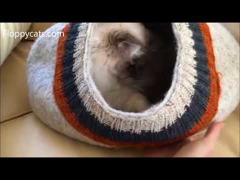 Ragdoll Cat Chiggy Playing in the Meowfia Cat Cave Felted Bed 😻 - Floppycats