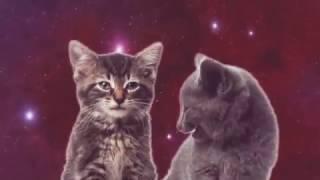 Классные котята