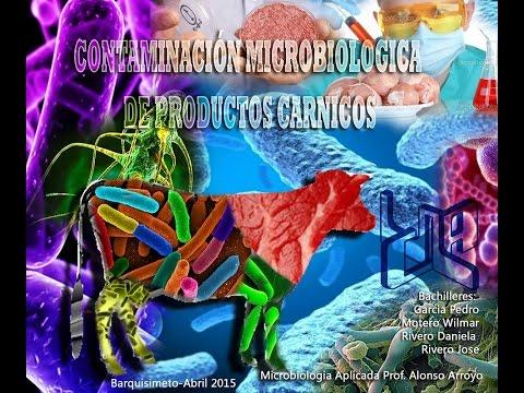 Contaminación Microbiológica de la Carne